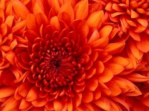 flower power!!